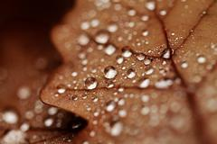 Fallen leaves covered with raindrops - stock photo