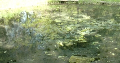 Mossy rocks from a spring water Stock Footage