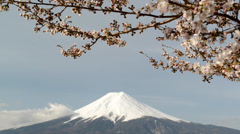 Stock Video Footage of Mt. Fuji with cherry blossom