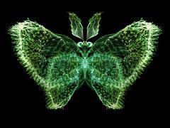 Butterfly Visualization Stock Illustration