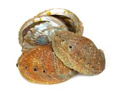 Four abalone shells Stock Photos