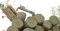 Set of logs being transferred to a truck Stock Footage
