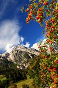 Alpine rowan(berry) - stock photo