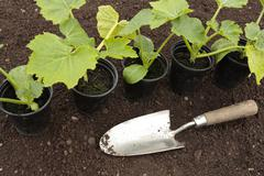 planting vegetable seeds in prepared soil in spring - stock photo
