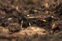 Hymenoptera - stock photo