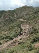 Hearding cattle in the Maloti mountains Stock Photos
