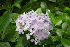 Ixora flower green background Stock Photos