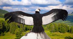 Andean condor in wildness area Stock Photos