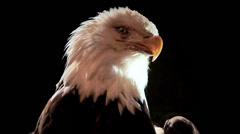 Bald Eagle, Extreme Close Up Stock Footage