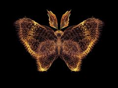 In Search of Butterfly - stock illustration
