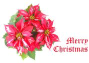 Stock Photo of Merry Christmas greeting card