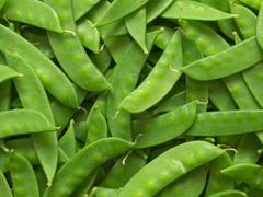 snow peas - stock photo