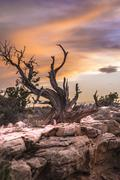 Single tree against sunset sky arches national park Stock Photos