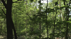 A harvester felling a tree in a thick forest Stock Footage
