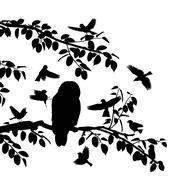 birds mobbing owl - stock illustration