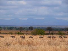 Gnu annaealed in africa - Tanzania Stock Photos