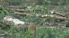 Devastation of forest by the logging industry 2 Stock Footage