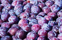 Ripe plums - stock photo