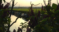 Canal and boats in evening sun. Stock Footage