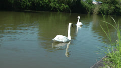 2 swans on water, angled shot Stock Footage