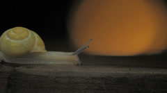 Yellow Shelled Land Snail with light in background profile Stock Footage