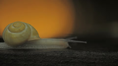 Yellow Shelled Land Snail moving profile with light in background Stock Footage