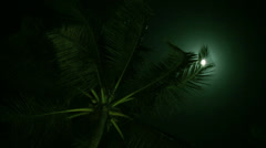 Palm trees in the night Stock Footage