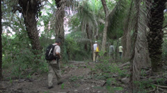 Stock Video Footage of 0130 Pantanal, group of tourists walking in wood