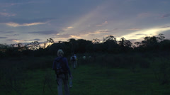 Stock Video Footage of 0139 Pantanal, group of tourists walking in wood at sunset