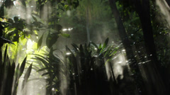 Misty jungle background Stock Footage