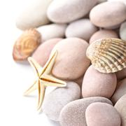 pile of stones, shells and sea star - stock photo