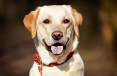Face of pedigree dog Stock Photos