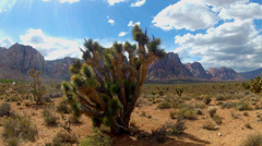 Joshua Trees At Red Rock Canyon National Conservation Area Stock Footage