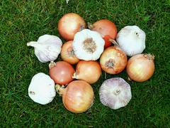 Onion and garlic in the green grass Stock Photos