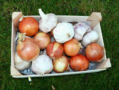 Crate onion and garlic in the grass Stock Photos