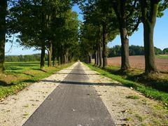 tree avenue in czech republic - stock photo