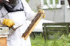 working apiarist - stock photo