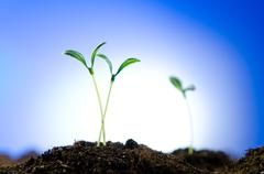 Stock Photo of Green seedlings in new life concept
