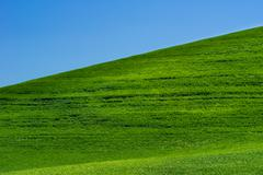 Bright green grassy field with blue sky Stock Photos