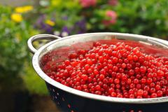 Fresh red currant berries with water drops in colander - stock photo