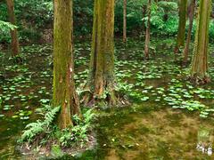 pond greenery - stock photo