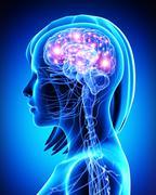 Female active brain anatomy Stock Illustration