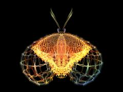 Metaphorical Butterfly - stock illustration