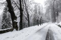 Snow in a winter day, forest of Campo dei Fiori - Varese - stock photo
