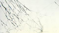 Spider web in wind loop Stock Footage