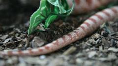 Snake Stock Footage