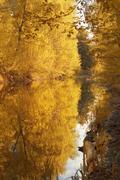 Autumn tints Stock Photos