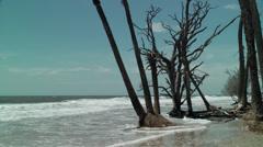 Dead tree bone yard ocean shore Stock Footage