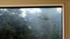 Cobweb fluttering in the window - stock footage
