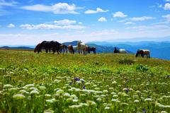 Mountains landscape with  herd of horses Stock Photos
